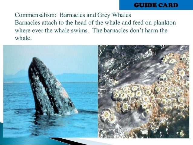 whale and barnacles relationship memes