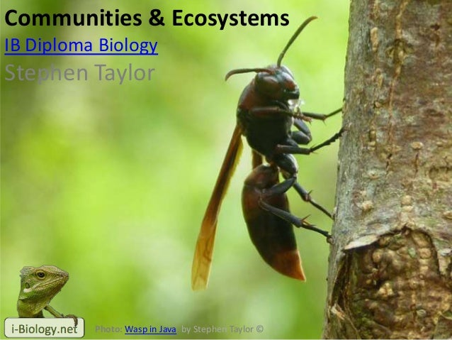 Communities & EcosystemsIB Diploma BiologyStephen TaylorPhoto: Wasp in Java, by Stephen Taylor ©