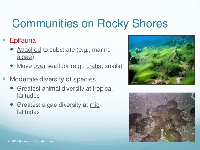 © 2011 Pearson Education, Inc.Communities on Rocky Shores Epifauna Attached to substrate (e.g., marinealgae) Move over ...