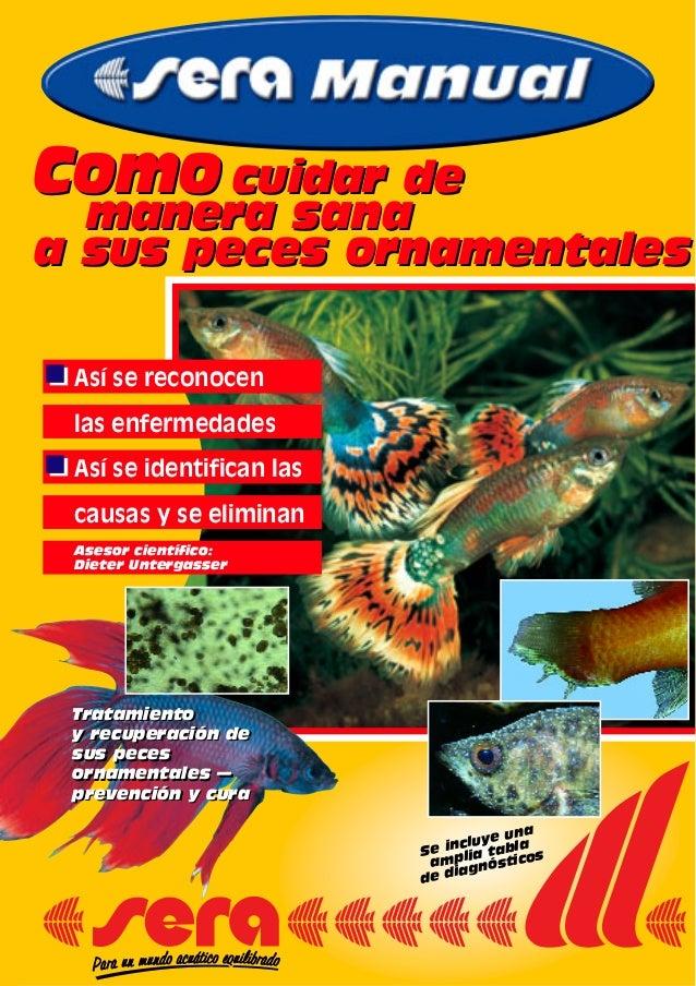 Como cuidar de manera sana a sus peces ornamentales