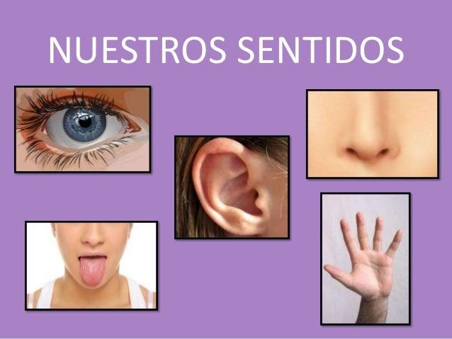 Como cuidar nuestros sentidos for El divan de los sentidos
