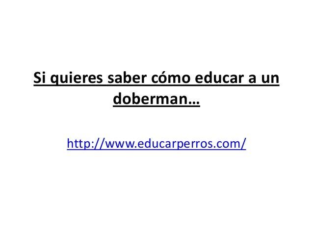 Si quieres saber cómo educar a un            doberman…    http://www.educarperros.com/