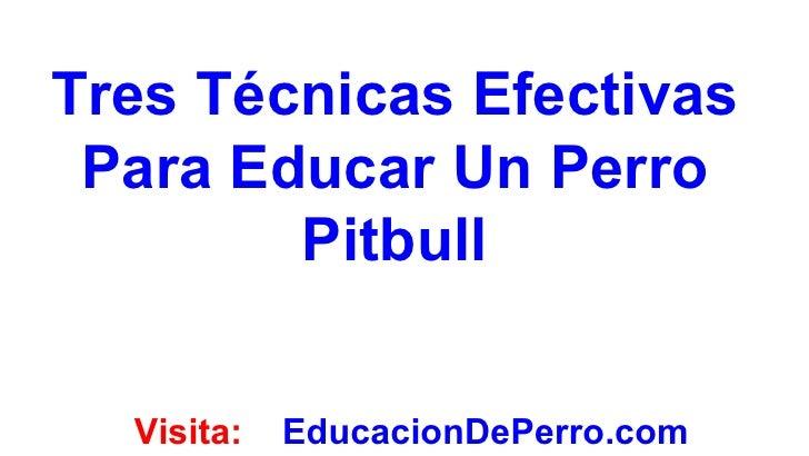 Tres Técnicas Efectivas Para Educar Un Perro        Pitbull  Visita:   EducacionDePerro.com