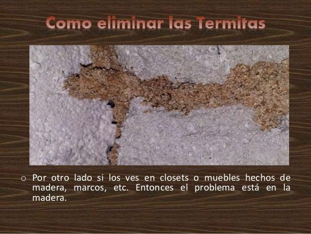 como eliminar las termitas