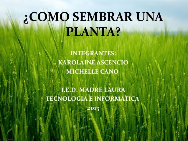 Como sembrar una planta imagui for Como sembrar plantas ornamentales