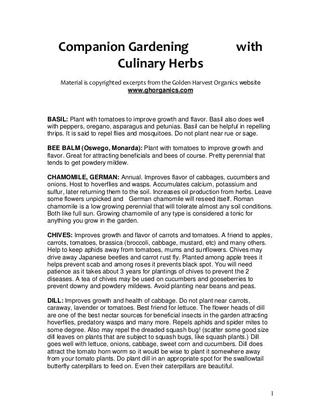 Companion Gardening                                                with            Culinary Herbs    Material is copyright...