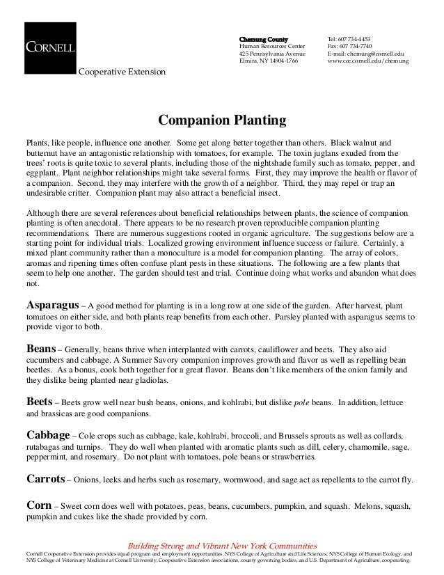 Companion Planting - Chemung County, New York