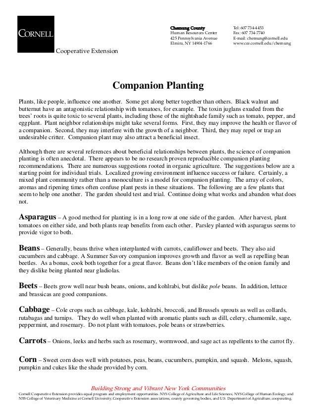 Companion Planting - Cornell University