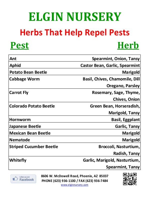 ELGIN NURSERY  Herbs That Help Repel PestsPest                      Herb                Ant                               ...