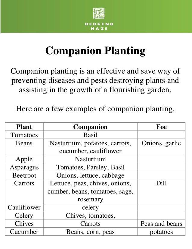 Companion PlantingCompanion planting is an effective and save way ofpreventing diseases and pests destroying plants and  a...