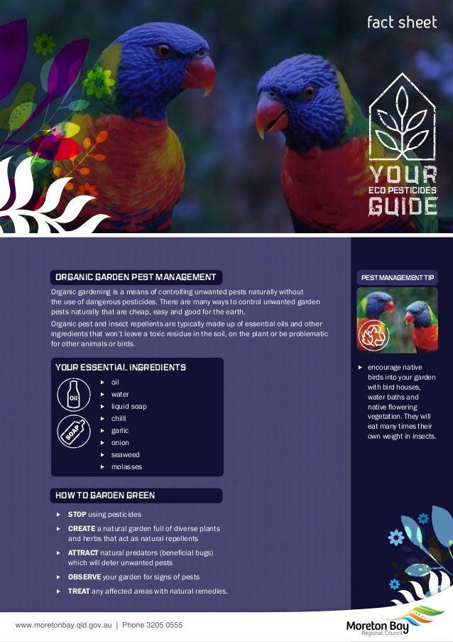 Companion Planting and Your Eco Pesticides Guide - Moreton Bay, Australia