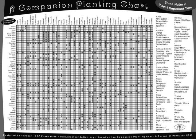 Companion Planting Chart - IDEP Foundation