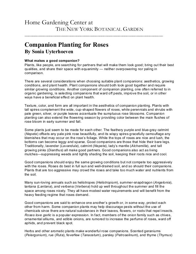Companion Planting for Roses - the New York Botanical Garden