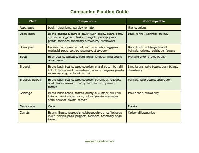 Companion Planting Guide - Veggie Gardener
