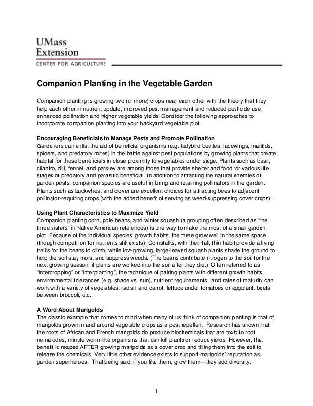 Companion Planting in the Vegetable Garden - University of Massachusetts