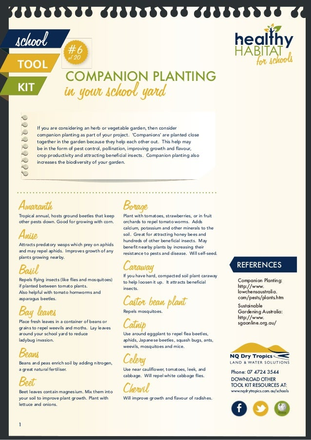Companion Planting in Your School Yard - Australia