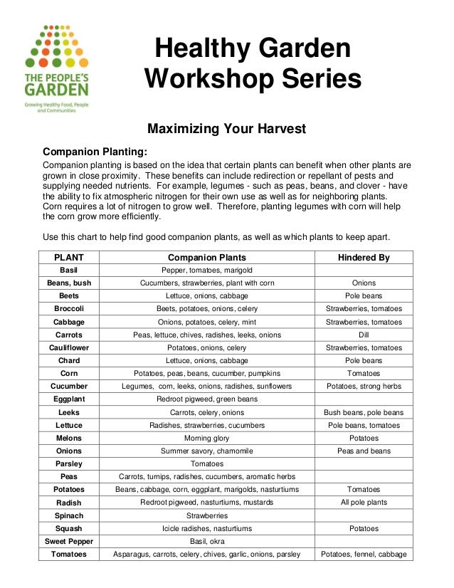 Companion Planting: Maximizing Your Harvest - Healthy Garden
