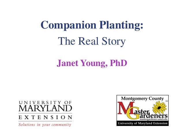 Companion Planting:  The Real Story   Janet Young, PhD