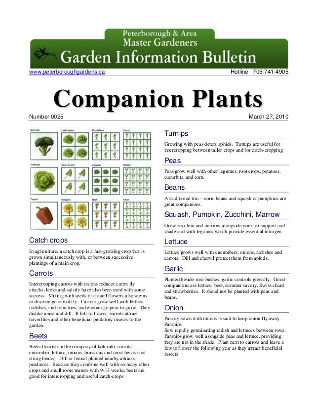 Companion Plants - Peterborough Master Gardeners, Ontario, Canada