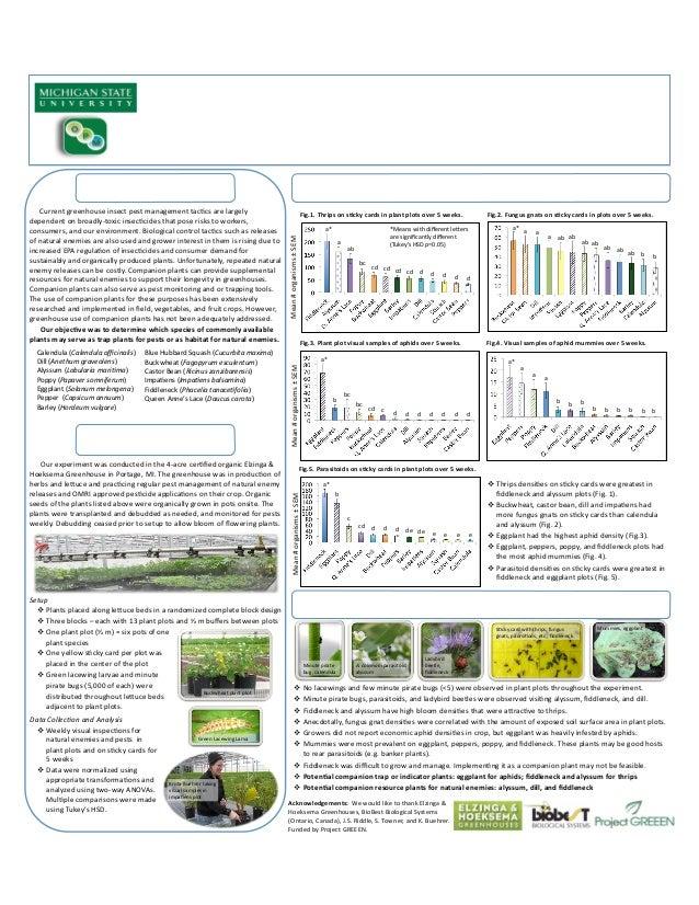 Companion Plants in Greenhouses - Michigan State University