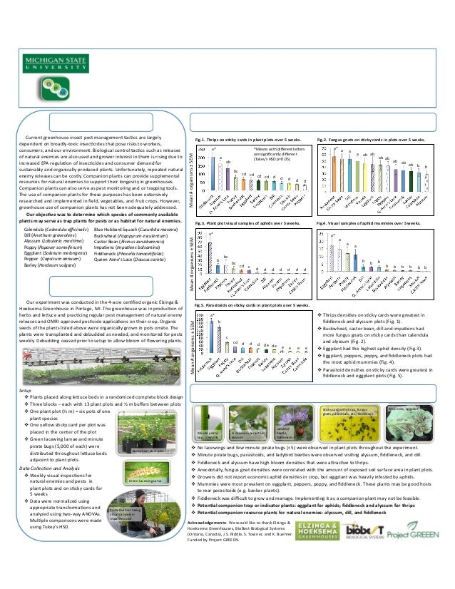 Companion Plants in Greenhouses - Michigan State University