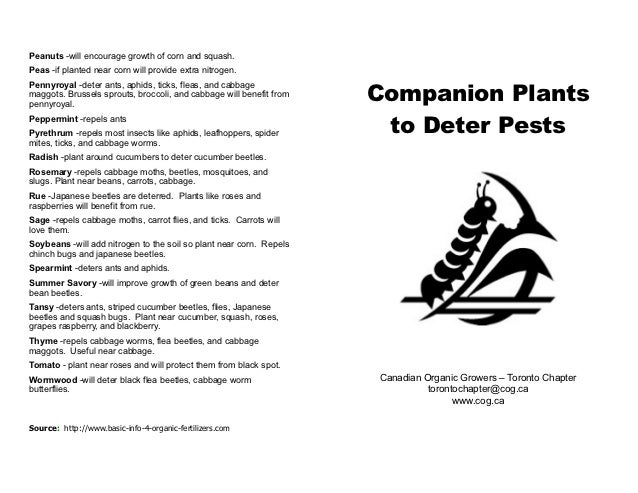 Companion Plants to Deter Pests - Canadian Organic Growers, Toronto Chapter