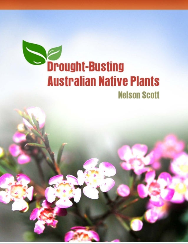 Drought Busting Australian Native Plants