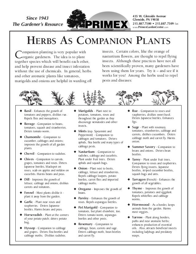 Herbs as Companion Plants - Glenside, Pennsylvania