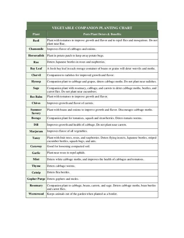 Vegetable Companion Planting Chart - Wood Lot Farms