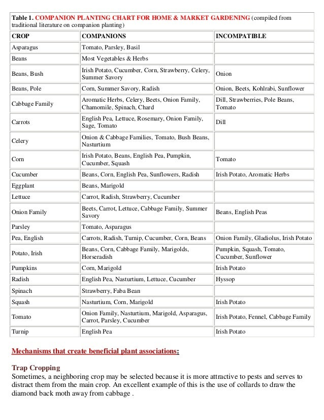 Companion Planting Chart for Home and Market Gardening - Growingtogethergarden