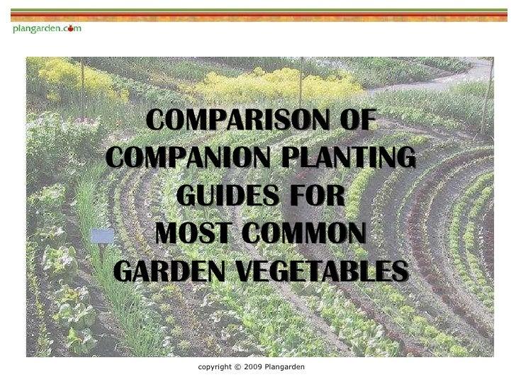 Companion Planting - Comparison of Garden Pro Advice