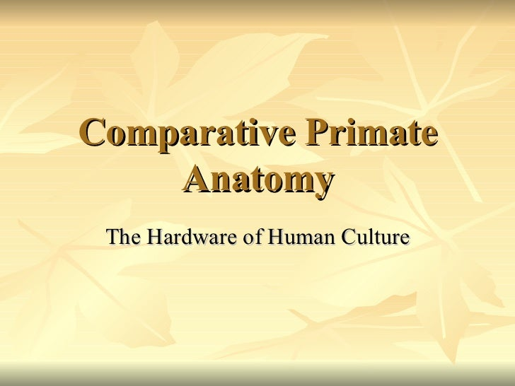 Comparative Primate Anatomy