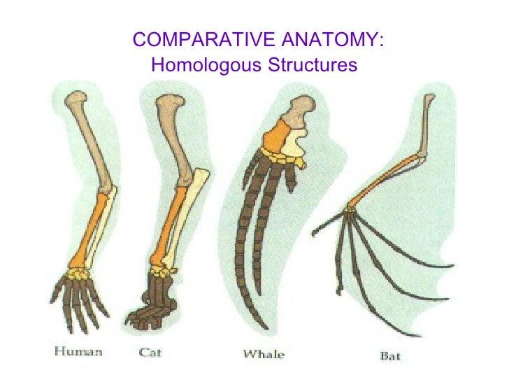 Comparative anatomy homologous structures