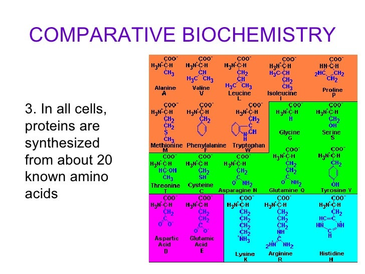 how are carbohydrates lipids nucleic acids organic
