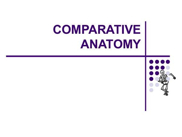 Comparative vertebrate anatomy lab