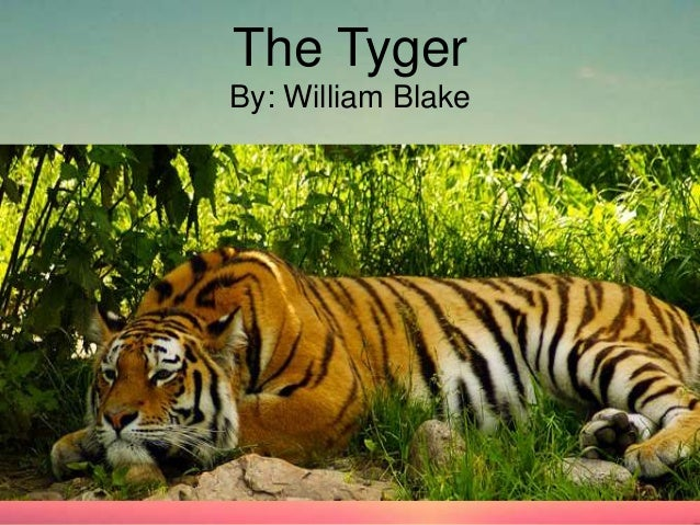 Lamb And Tyger Essay