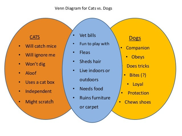 Cat and dog compare contrast essay