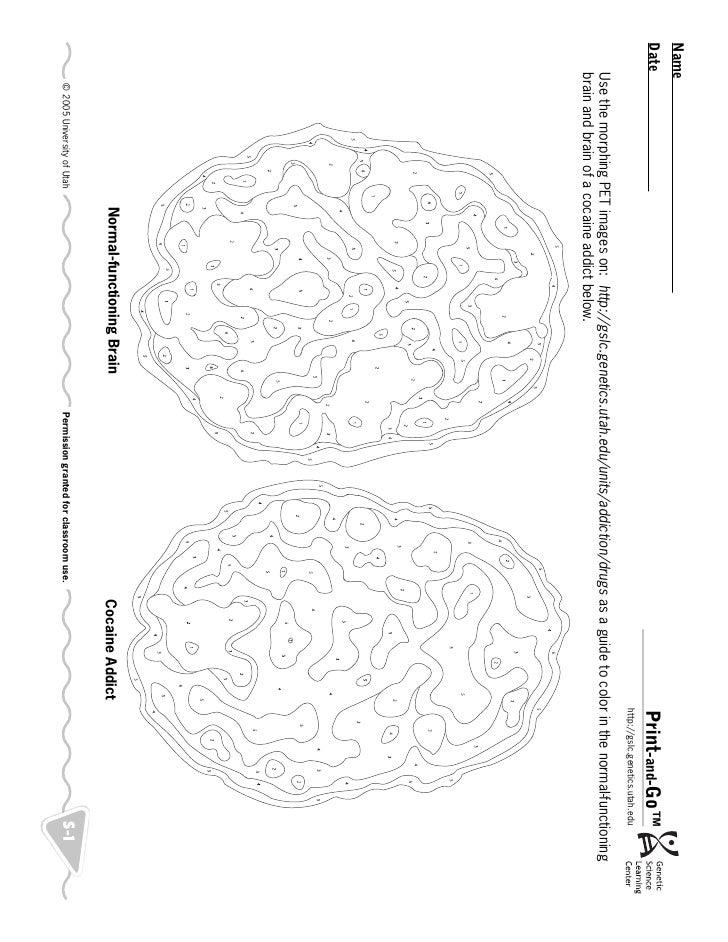 Brain Normal Function Normal-functioning Brain