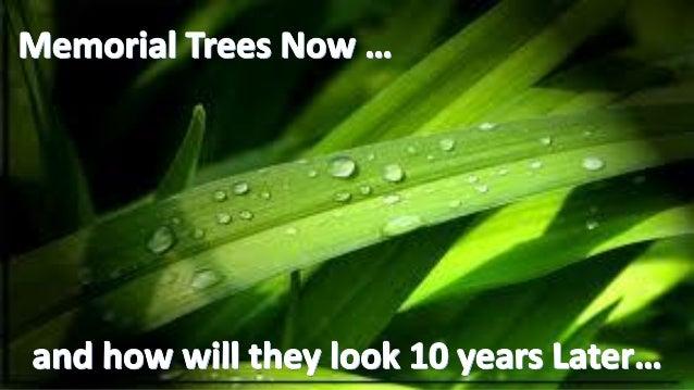 Comparisionof trees