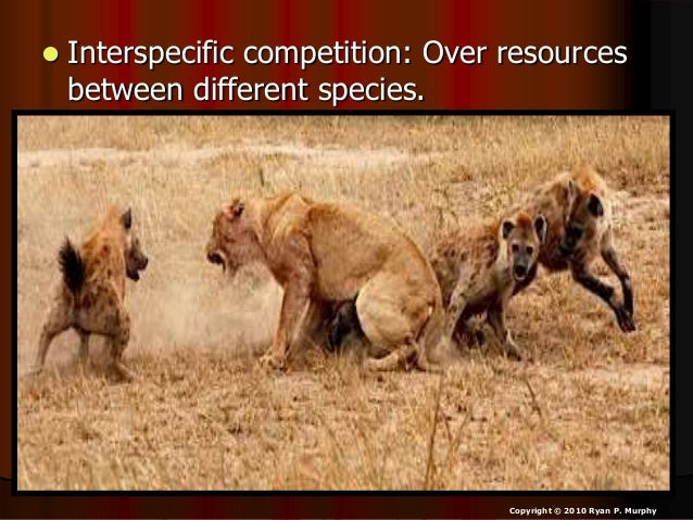 articles on intraspecific competition