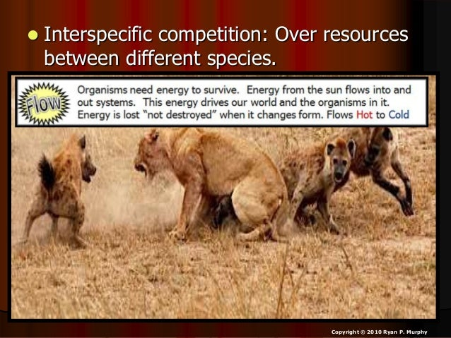 Image Gallery intraspecific competition