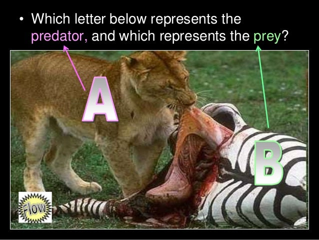 • Which letter below represents the predator, and which represents the prey?
