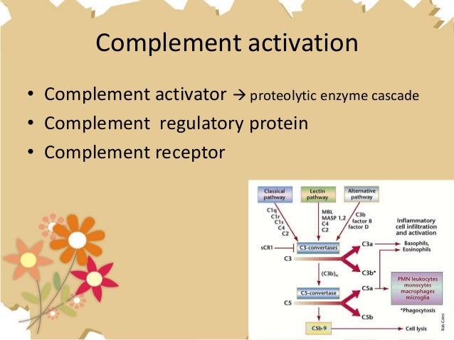 cellular and molecular immunology 7th edition pdf