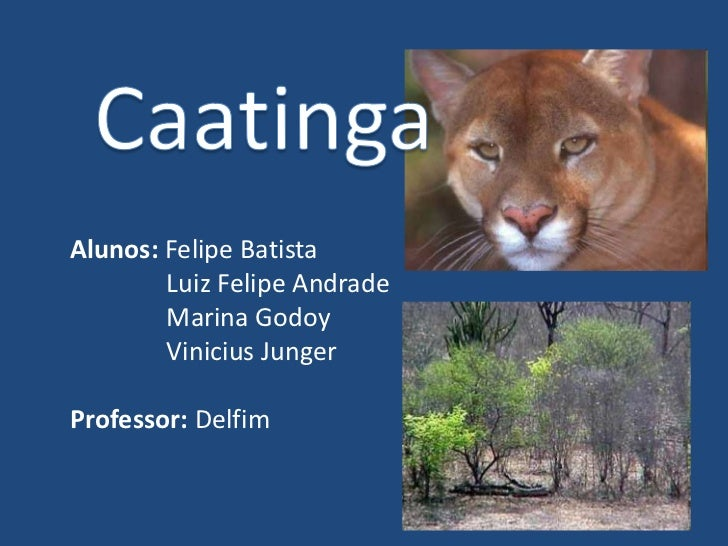Caatinga<br />Alunos: Felipe Batista<br />Luiz Felipe Andrade<br />Marina Godoy<br />Vinicius Junger<br />Professor: Delfi...