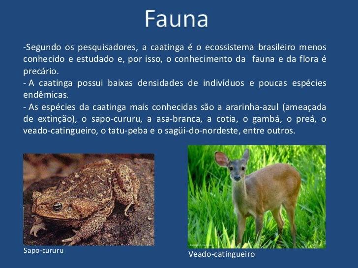 Resultado de imagem para flora da caatingas
