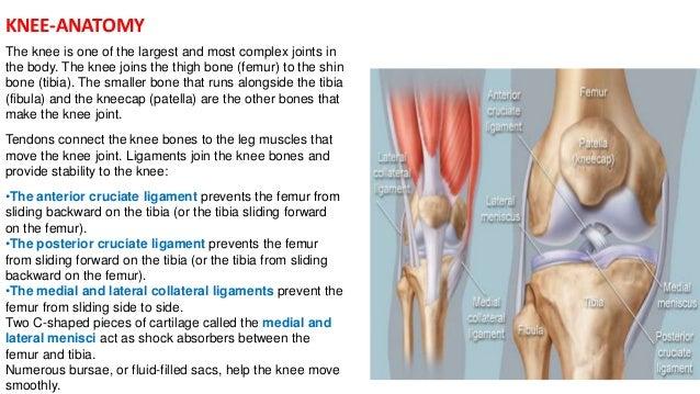 Anatomy of knee pain