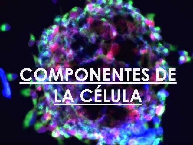 Componentes de la célula