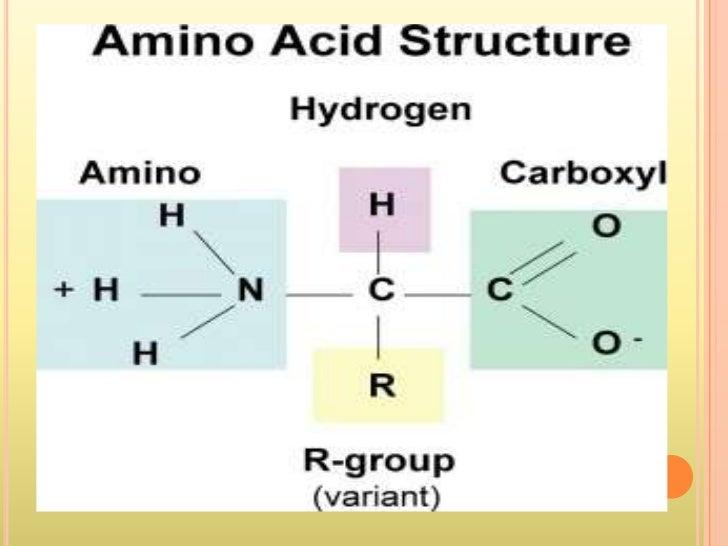 biosynthesis of essential amino acids pdf