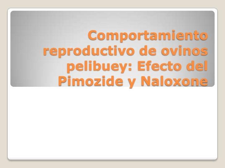 Comportamiento reproductivo de ovinos pelibuey: Efecto del Pimozide y Naloxone<br />