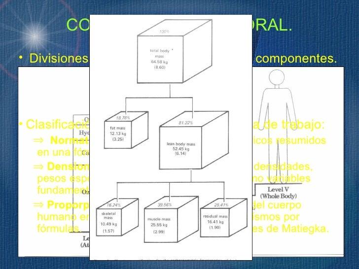COMPOSICIÓN CORPORAL.• Divisiones Bioquímicas y divisiones en componentes.  ⇒ Modelo de 2 componentes. (MG y MLG)  ⇒ Model...